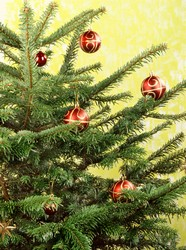 Christmas tree picture material download