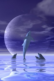 Dolphin HD creative design pictures