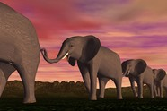 Elephant 3D creative design pictures