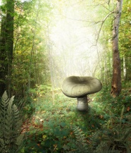 Forest mushroom cartoon picture download