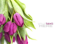 Fresh flowers backgrounds HD pictures 3