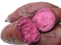 Fruit and vegetable standard definition footage  –  purple sweet potato 01