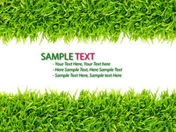 Green grass background 02–HD pictures