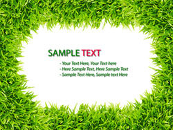 Green grass background 03–HD pictures