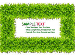 Green grass background 04–HD pictures