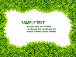 Green grass background 05–HD pictures