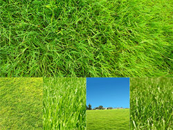 Green grass grass feature HD picture -2 (5P)