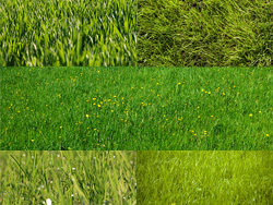 Green grass grass feature HD picture -3 (5P)