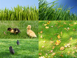 Green grass grass feature HD picture -4 (5P)