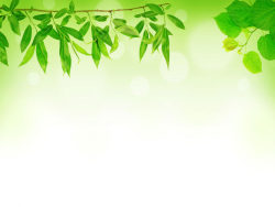 Green leaf background 04-HD pictures