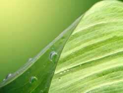 Green leaf HD Photo-4