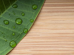 Green leaf wood background 03-HD pictures