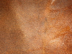 HD pictures-orange background color series 7