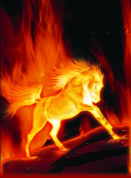 HD running horse flame picture download
