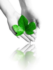 Holding the green leaf picture download
