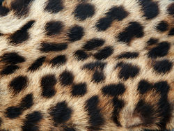 Leopard cashmere fabric HD pictures-5