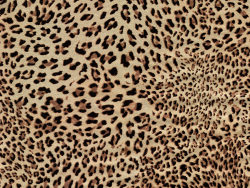 Leopard cashmere fabric HD pictures-6