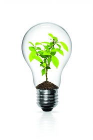 Little saplings in the light bulb pictures