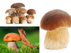 Mushroom   HD pictures 4