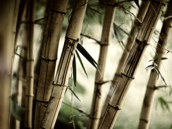 Secluded bamboo picture material