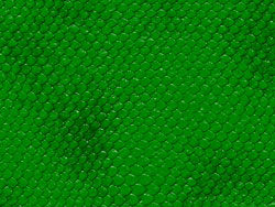 Snake skin texture 01–HD pictures