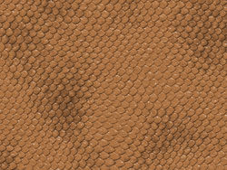 Snake skin texture 02–HD pictures