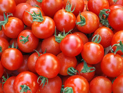 Tomato background picture material