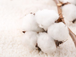 Warm cotton HD pictures-2
