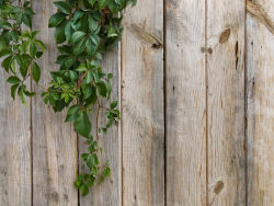 Wood plank background HD picture material-3