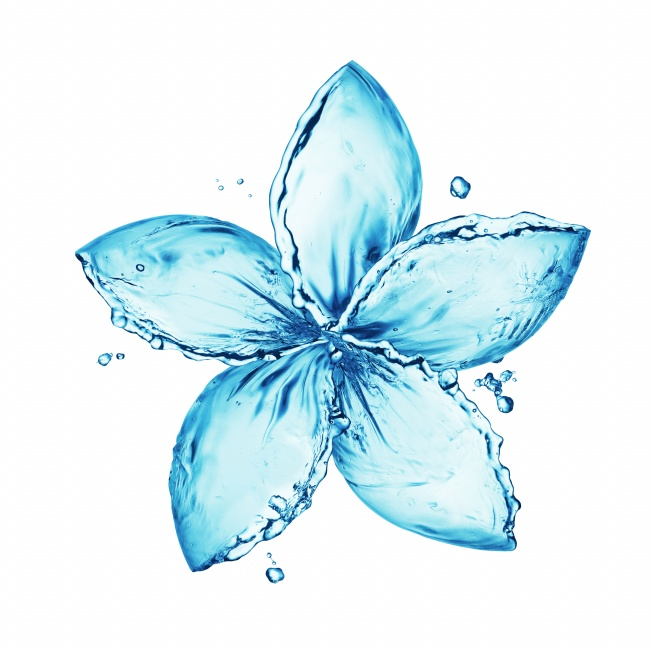 Transparent water flower pictures