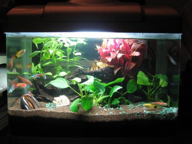 Aquarium pictures