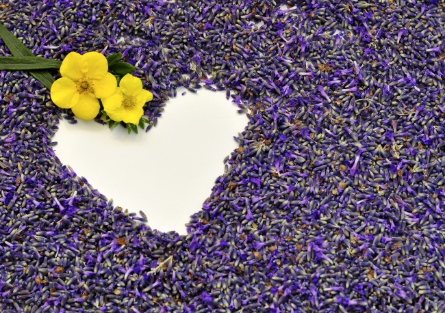 Beautiful heart-shaped Lavender background pictures