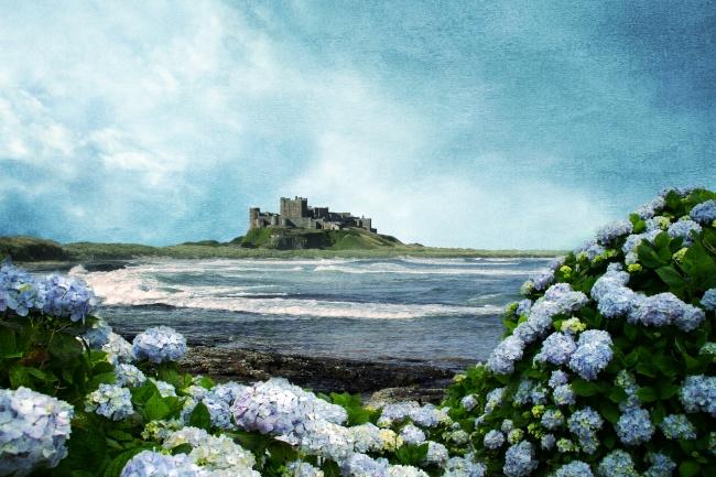 Hydrangea beautiful landscape pictures