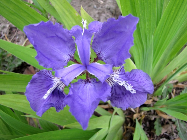 IRIS HD picture download
