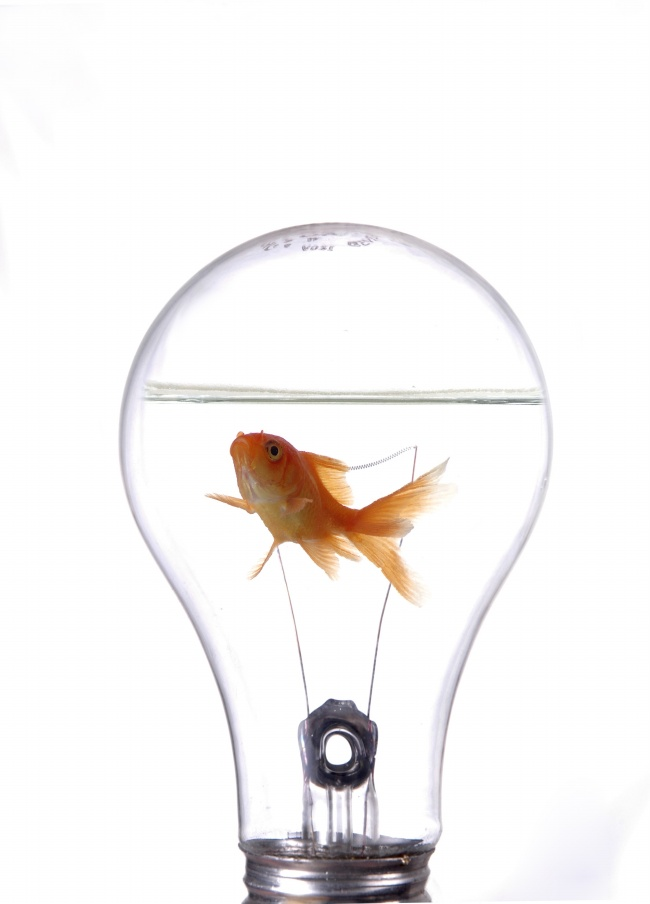 Light bulb in goldfish pictures