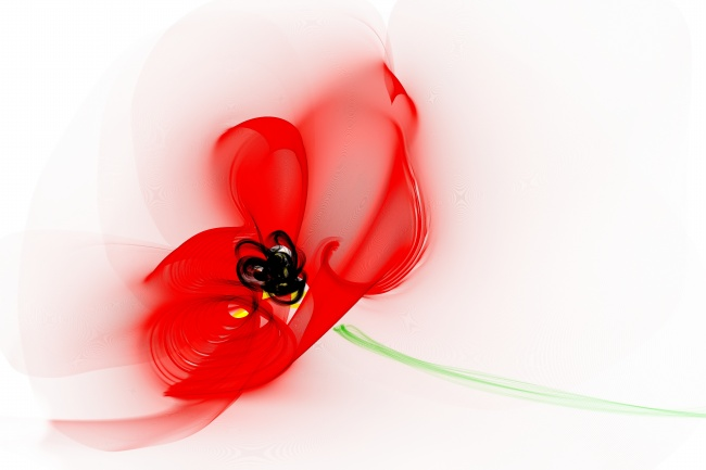 Poppy flower pictures download