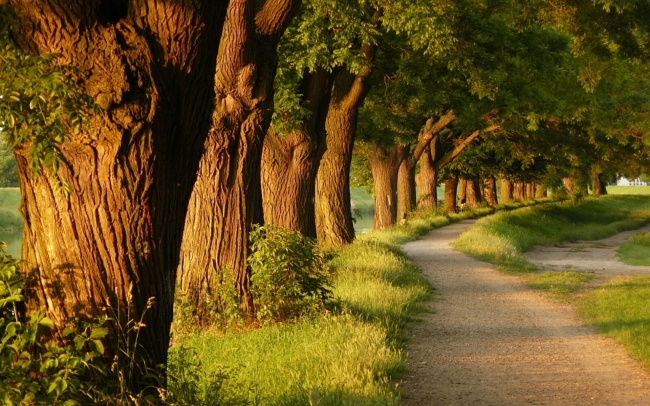 Quiet and roadside trees picture download
