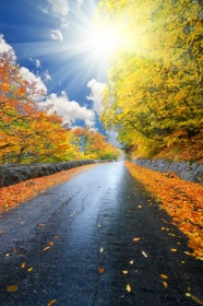 Autumn landscape path HD pictures