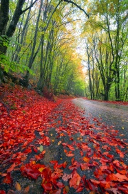 Autumn leaves admissible landscape pictures