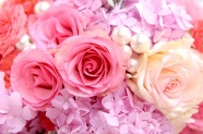 Beautiful rose flower pictures