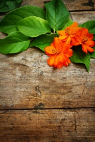 Elegant and fresh orange flowers