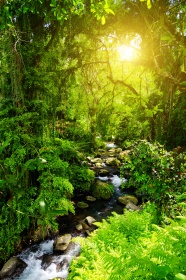 Forest stream HD pictures