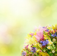 Fresh elegant flowers pictures