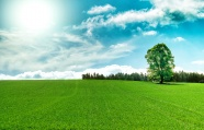 Fresh grassland beautiful pictures download