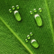 Green leaves footprints drops pictures download