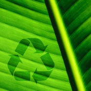 Green recycle logo picture
