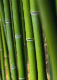 HD green bamboo picture download