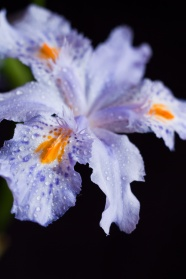 HD IRIS picture download