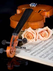Pink flower violin pictures