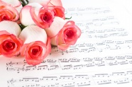 Pink Rose romantic backgrounds pictures
